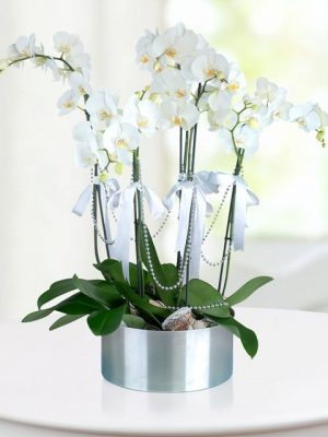 6-dal-beyaz-orkide-arajmani