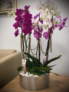 6-dal-renkli-orkide-arajmani